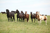Batch of horses resting on pasturage