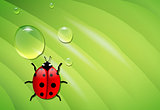 ladybug on wet leaf