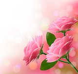 Holiday background with three pink flowers. Vector illustration