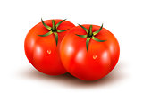 Tomatoes isolated on on white background. Photo-realistic vector