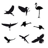 Set of different photographs of birds isolated on white backgrou