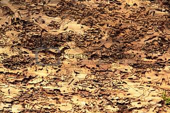 abstract background with bark beetle traces