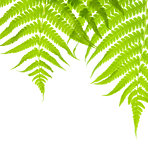 Background with lush fern leaves