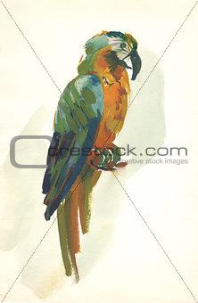 watercolor parrot sketch