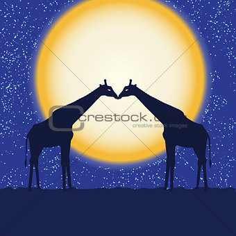 Card with giraffe pair at night