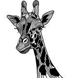 Giraffe head vector animal illustration for t-shirt. Sketch tattoo design.