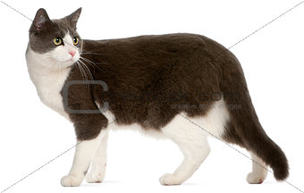 Cat standing in front of white background