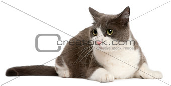 Cat lying in front of white background