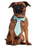Pug, 3 years old, wearing a tie in front of white background