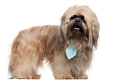 Lhasa Apso wearing a tie and standing in front of white background