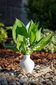 Blooming Lily of the valley in white vase outdoor