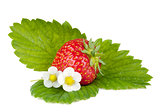 Strawberry fruits with green leaves and flowers