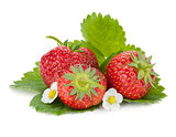 Three strawberry fruits with green leaves and flowers