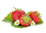 Three strawberry fruits with flowers and green leaves