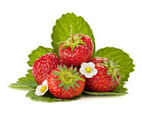Strawberry fruits with flowers and green leaves