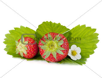 Two strawberry fruits with green leaves and flowers