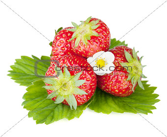 Four strawberry fruits with green leaves and flowers