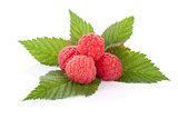 Fresh raspberries heap