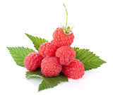 Fresh raspberries heap on leaves