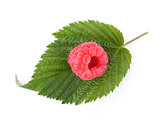 Fresh raspberry on green leaf