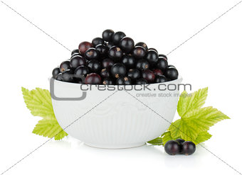 Black currant bowl