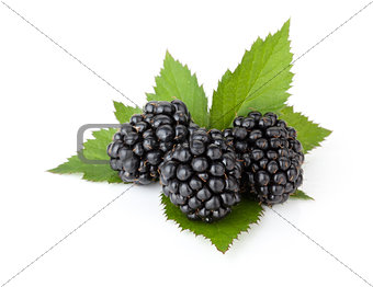 Three ripe blackberries with leaves