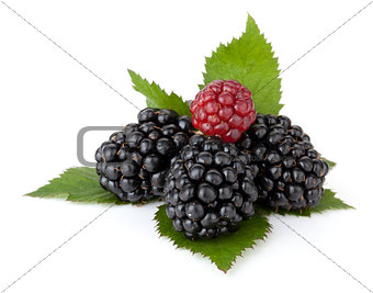 Ripe blackberry with leaves