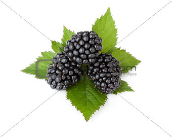 Three ripe blackberry with leaves