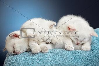 Three sleeping british baby kittens