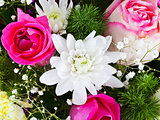 white chrysanth and pink roses