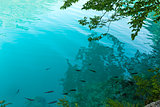 Small fish shoal in azure lake