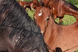 Young colt horse