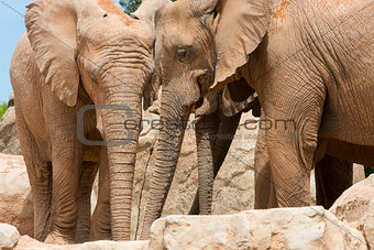 Elephant (elephants) in a natural park.