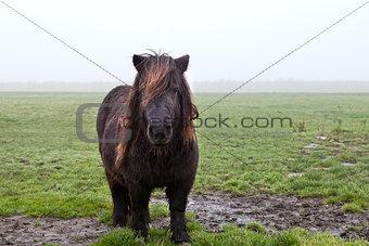 pony on pasture in fog
