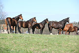 Horses standing in the line