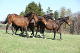 Horses on pasturage moving