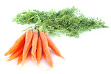 early carrot