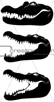Black head of crocodile