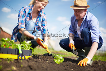Farmers working