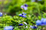 Blue flower and green grass