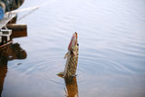 Pike Fishing