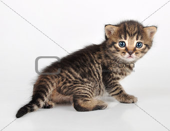 beautiful cute  kitten looking back