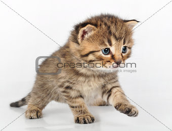 beautiful cute kitten walking alone