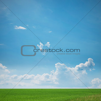 Green Meadow Landscape