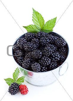 Blackberries in a bucket