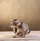 Small kitten sitting on wooden floor