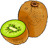 kiwi fruit cartoon illustration