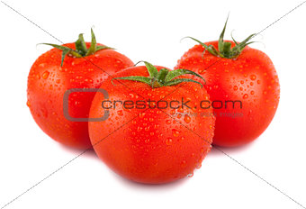 Three ripe red tomato with water drops