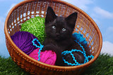 Adorable Kitten in a Case Filled with Yarn