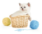 British kitten in basket